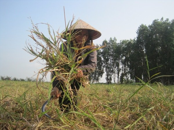 Vietnamese agro-scientists sell seeds to earn a living