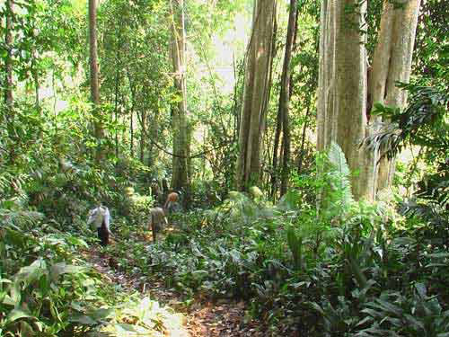 Efforts made to preserve biodiversity in Cat Ba National Park