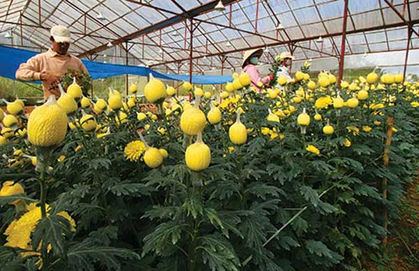 Japanese agricultural firms, plants seeds, hi-tech agriculture, clean vegetables