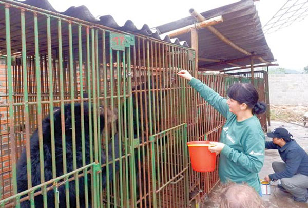 Bears died of injuries, malnutrition in Quang Ninh Province
