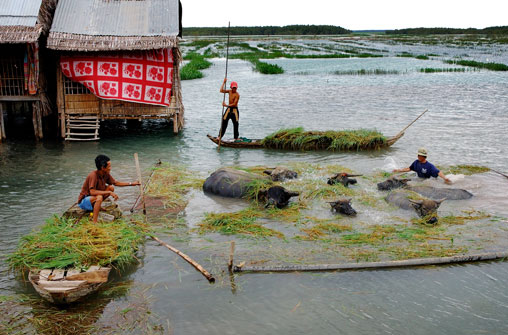 Coordinator needed in Mekong Delta climate change fight