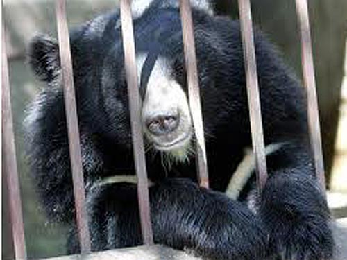 Maltreated bears to be rescued from farms