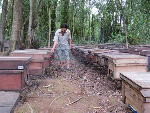 Nomad life among bee hives