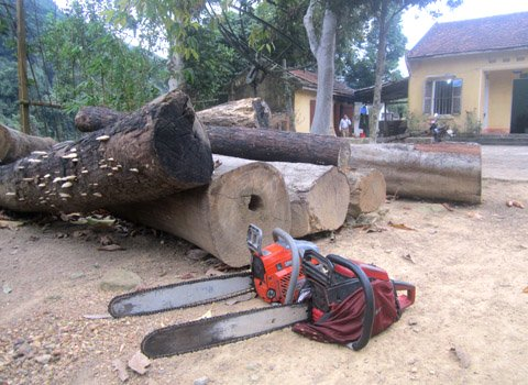 Tay Yen Tu primeval forest ravaged by illegal loggers