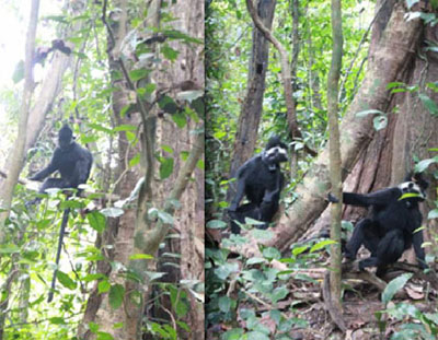 Legal proceedings commence for endangered animal violation