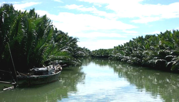 Hoi An offers afforestation tourism in Cam Thanh