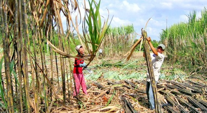 Sugar association has battle of words with Industry ministry