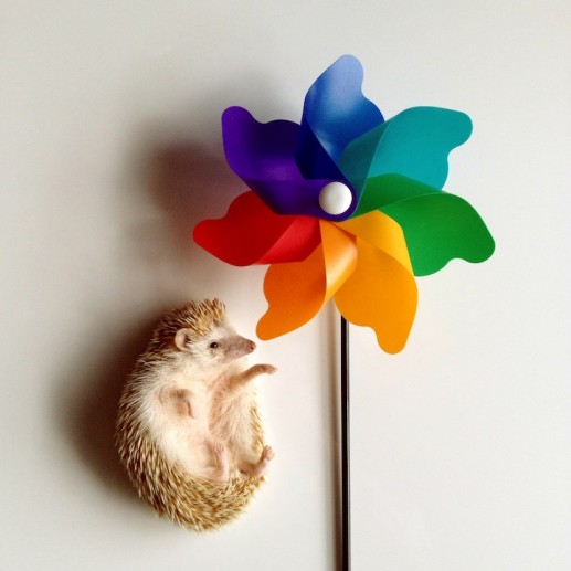 Darcy the Flying Hedgehog 9
