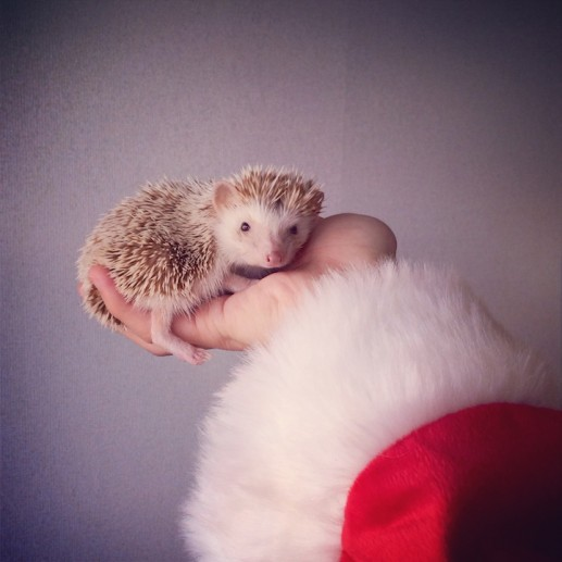 Darcy the Flying Hedgehog 3