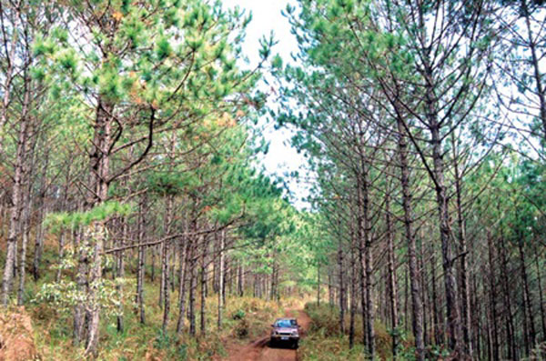 Forestry sector told to focus on restructuring
