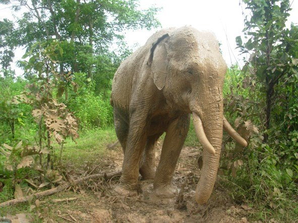 Money disbursed, but elephant protection project at a standstill
