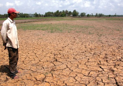 Drought announced in Ninh Thuan province
