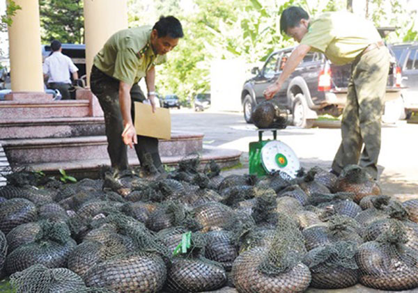 More than 1m pangolins sold for food, medicine