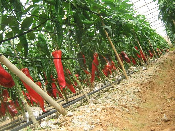 Experts vie for high-tech farming