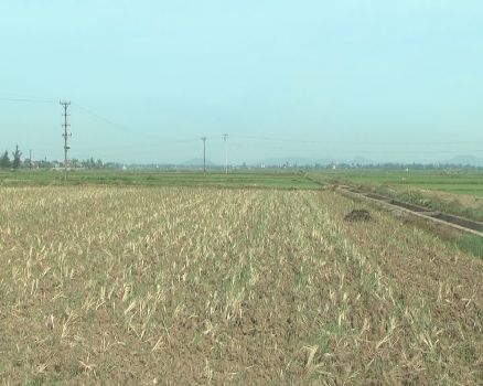 Nghe An declares state of emergency due to drought