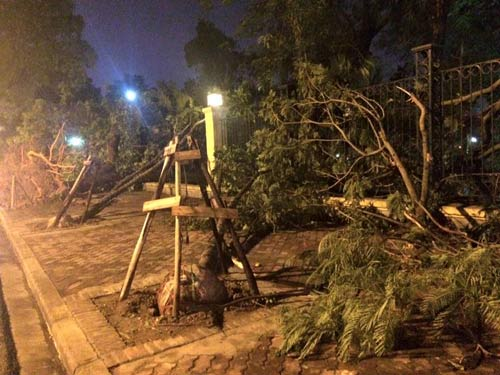 Hanoi begins investigation of nylon-wrapped tree roots