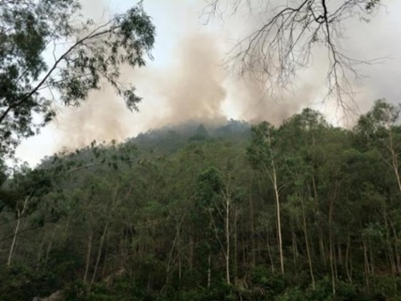 More than 1,600 people deployed to save forest in Thanh Hoa  More than 1,600 people were dispatched to control a fire that broke out yesterday and destroyed some 20 hectares of pine forest in the Hau Loc and Hoang Hoa districts.