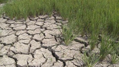 Drought hits VN agricultural sector growth