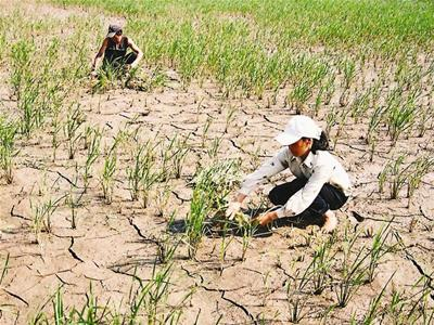 Adverse climate change affects in various fields in Vietnam: Experts