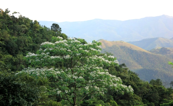 Bac Giang: Conserving and developing the ecosystem of Tay Yen Tu Natural Reserve