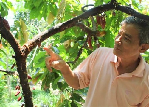 Special ant breed offers natural protection for farmer's crops