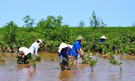 Hau Giang: 38 priority projects responding to climate change