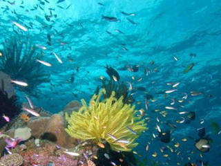 An appropriate mechanism needed to develop marine protected areas