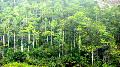 Bac Giang province keen to develop forestry