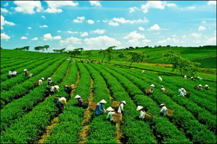 Seeking solution for econ restructuring and green growth