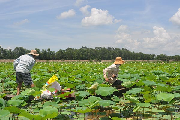 Restoration of Lang Sen Wetlands for biodiversity protection and improved livelihoods