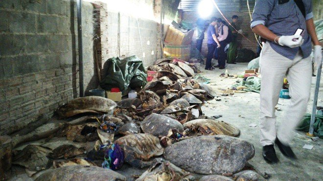 Police find thousands of dead sea turtles in Nha Trang warehouses