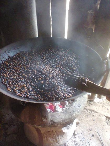 Harvest coffee beans with farmers in Central Highlands