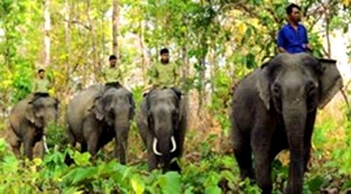 VND74 billion for protecting wild elephants in Dong Nai