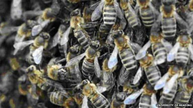 Honeybee shortage threatens crop pollination in Europe