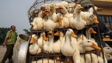 First human death from H5N1 flu in VN this year