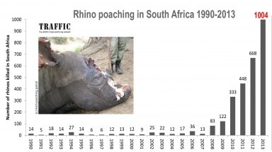 2013 worst ever for rhino poaching in South Africa