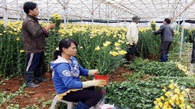 Da Lat offers finance for flower growers