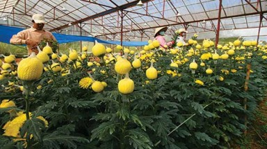 Japan plants seeds of hi-tech agriculture
