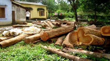 Deforestation continues to deplete nation's wealth