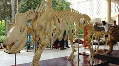 Vietnam National Museum of Nature to open in Hanoi