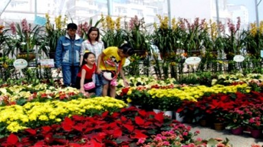 Farming tours in Da Lat attract many visitors