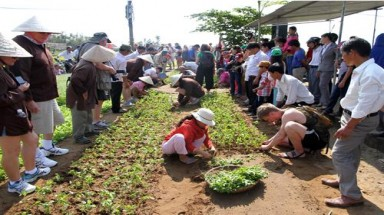 Foreign tourists and Hoi An's farmers compete in vegetable growing contest