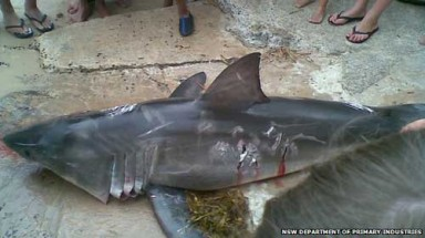 Australian fined for killing great white shark
