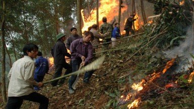 Provinces alerted of forest fire risk as dry season continues