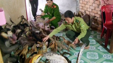 Operation Game Change to be launched in VN to combat wildlife crime