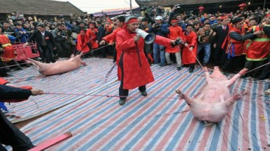 Locals want to preserve pig-chopping rite