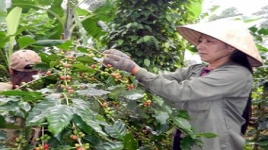 Vietnam named 5th most recognised coffee producer in US