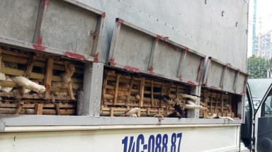 Nearly three tons of smuggled cats culled