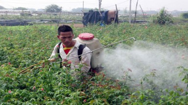 Pesticide abuse raises food safety concerns