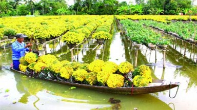 Mekong flower town enjoys growing fame